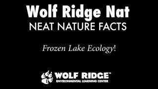Frozen Lake Ecology