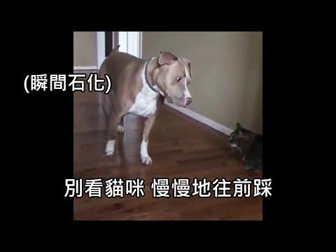 狗表示:老伴我下次不會再徹夜不歸了,不要跪算盤