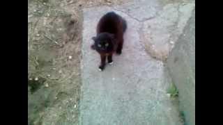 Кот не пускает домой !!!