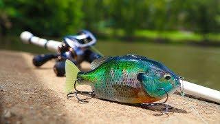 Pond Fishing With BIG Bluegill SwimBait!! - Video Youtube