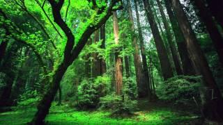 Peru Amazon Ayahuasca Shamanic Songs