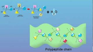 Chemistry - Peptides