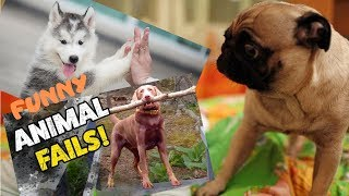 Funniest Animals & Pets of the Week | Funny Animals Videos