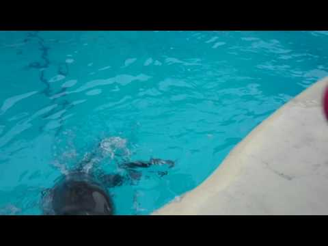 הילד הזה התחיל לשחק מסירות עם דולפין - וזה פשוט מקסים!