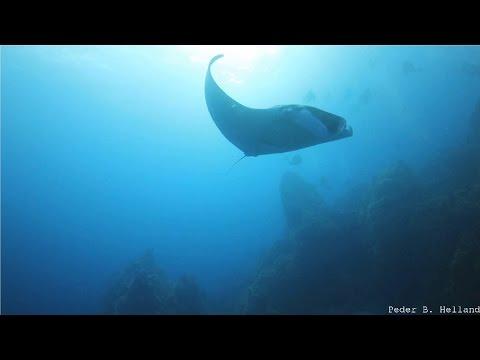 Beautiful Nature Video & Relaxing Music - Dream (HD)