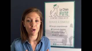 """Le Chien Futé évolue sans cesse et est devenu le """"Centre Éducatif Le Chien Futé"""", un centr"""