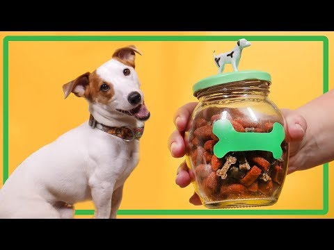 Life Hacks For Your Pets. DIY Toys For Dogs. Tips And Tricks