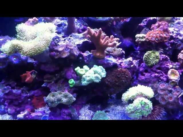 Reef tank SUCCESS RECIPE for nano cubes