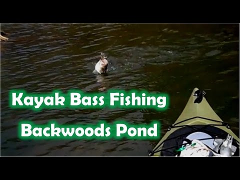 Kayak Bass Fishing NY – Spring Time Back Woods Pond (Top Water Frog)