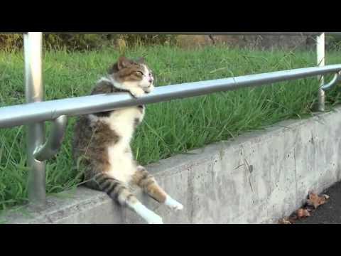 Кот задумался 夕暮れの お座り猫ちゃん/ Cat sitting relaxed (видео)