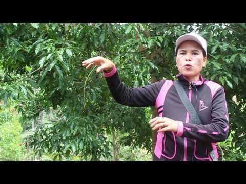 Video FFH2016, Seliwati, Perempuan Pejuang, Tanam Jengkol Lawan Sawit