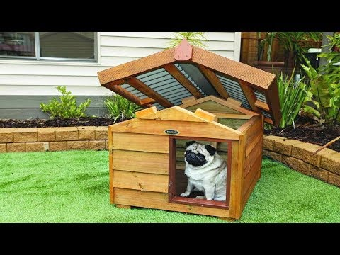 50+  Cool Dog House Decoration Ideas!