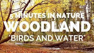 5 MINUTES IN NATURE- Autumn Colours- Relaxing River and Bird Sounds
