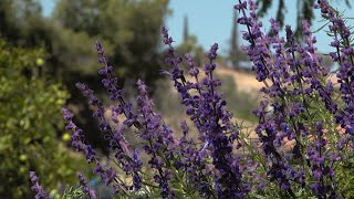 Seasonal Color in Native Plantings