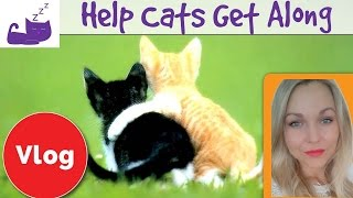 How to help your cats to get along 🐱  Reintroduction technique for cats 🐱