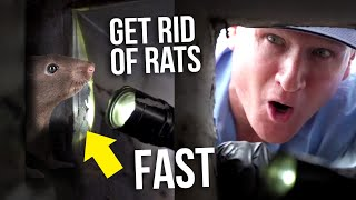The BEST Way to Get Rid of Rats and Mice QUICKLY from your Ceiling and Walls - Twin Plumbing