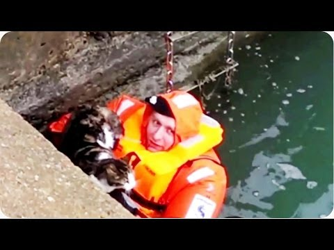 Amazing Cat Rescue From Under Boat