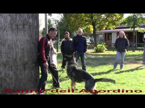 immagine di anteprima del video: Fanny dell´Agordino Ottobre 2011