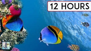 CORAL REEF AQUARIUM COLLECTION • 12 HOURS • BEST RELAX MUSIC • SLEEP MUSIC • 1080p HD #3