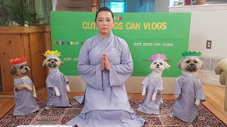 Phật Pháp nhiệm mầu, Bốn bé chó tuyệt vời đội hoa lễ Phật, mừng ngày Phật đản 2020