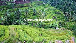 Discover Paradise in Bali