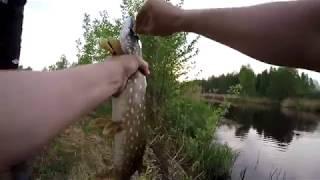 Костичево озеро балахнинский район рыбалка