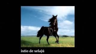 El garañón