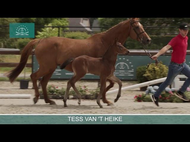 TESS VAN 'T HEIKE