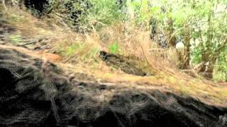 Terrestrial LiDAR - blue gum eucalyptus and bay laurel sub-canopy