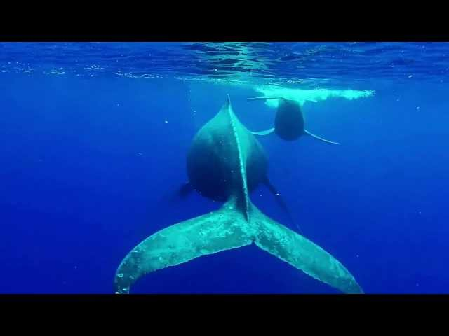Snorkeling with Whales in Maui, Hawaii