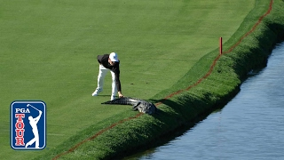 لاعب غولف في مواجهة تمساح