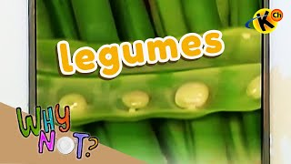 Extracurricular | Legumes | Why Not?