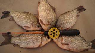 Отчеты о рыбалке на озере тенис