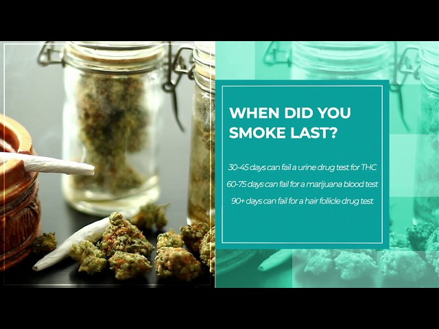 can diet and fitness affect marijuana follicle test
