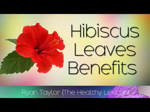 Video Hibiscus Leaves: Benefits and Uses