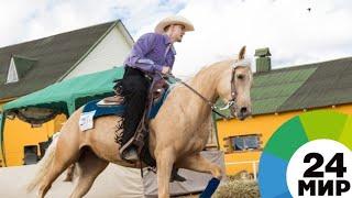 Танцы на лошадях: в Беларуси проходит этап Кубка мира по выездке - МИР 24