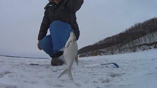 Рыбалка на усе самарская область шигонский