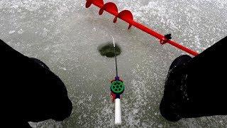 Как правильно выбрать мотыля для рыбалки