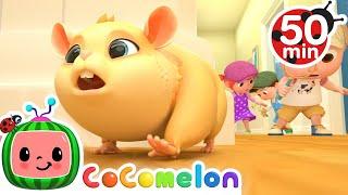 Lost Hamster Song + More Nursery Rhymes & Kids Songs - CoComelon