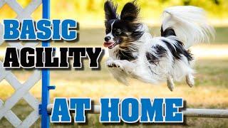 Teach basic agility to your dog at home