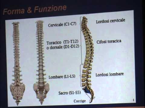 Come distinguere lombalgia da spondilosi