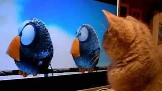 Домашние Животные, Как котенок смотрит мультик :)