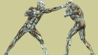 Sport et morphologie: Frédéric Delavier et Lucie Bertaud sur Combat Sport.