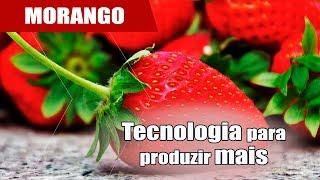 Como aumentar a renda com produção de morango?