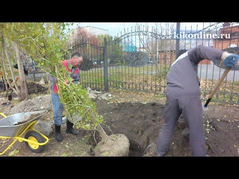 Высадка деревьев и кустарников в Горсаду