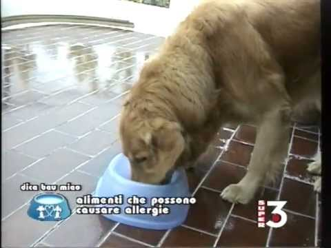 Leczema umido diventante a un gatto che trattare