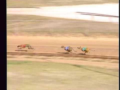 Race 23