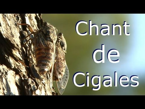 A écouter en préparant Velouté de Potimarron Parfumé