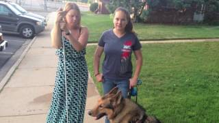 How a Blind Person Uses a Guide Dog
