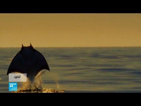 العرب اليوم - شاهد: حيوانات ترصدها الكاميرات للمرة الأولى